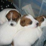 Leigh Walton's Dog Martha with her siblings